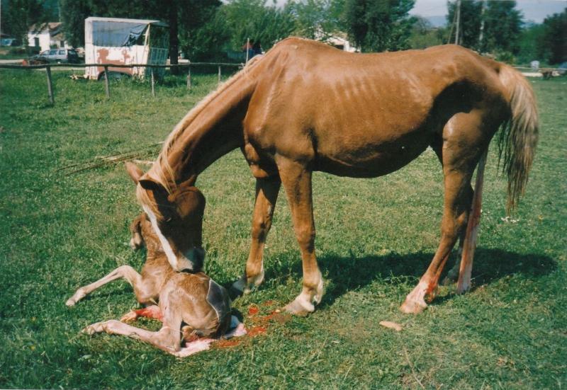 Cavallo Calabrese - Fonte immagine paglialonga.it