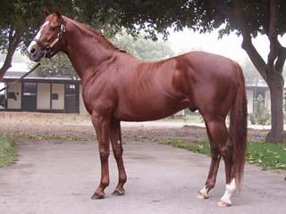 Cavallo Purosangue Inglese - Fonte immagine wikipedia.org