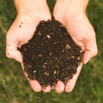 Fai da te: Fertilizzanti Naturali