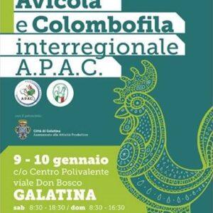 1° Esposizione Avicola e Colombifila interregionale