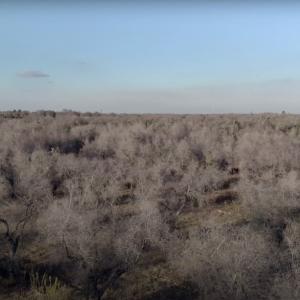 Apocalisse Xylella, un docu-film racconta la tragedia degli ulivi di Puglia