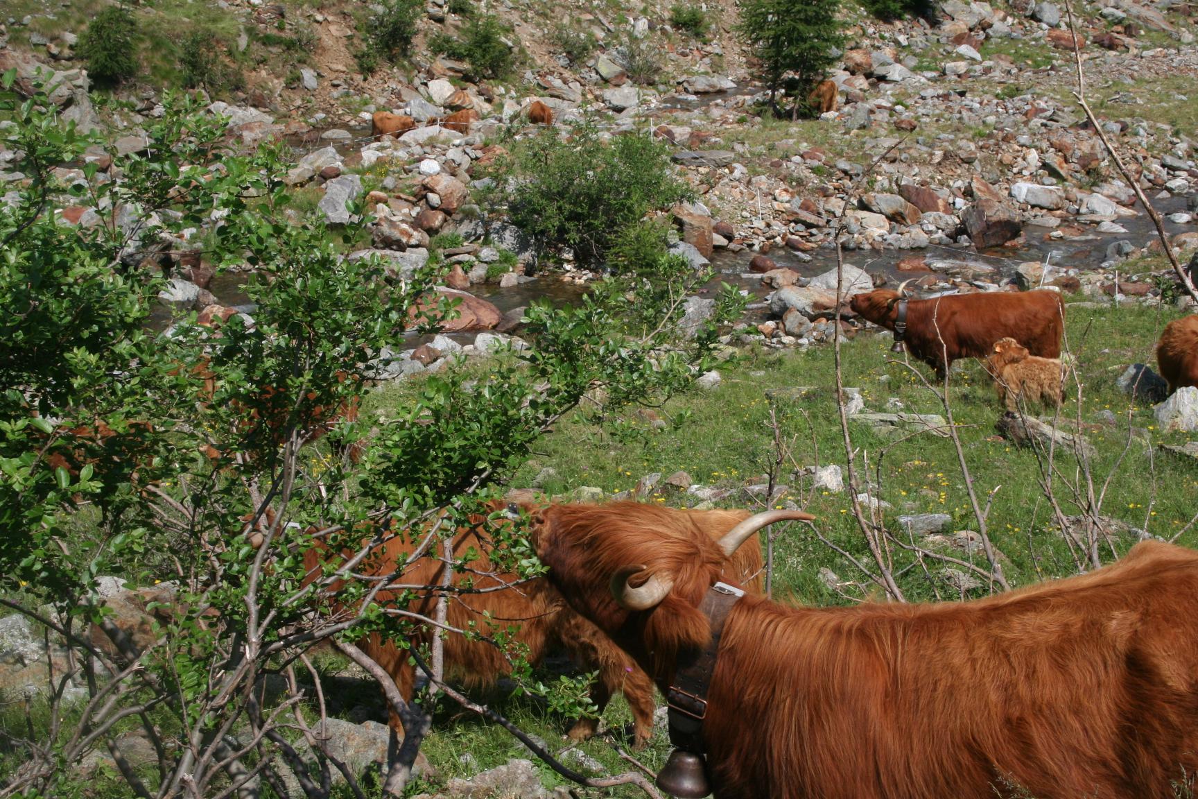 Allevamenti di montagna e tutela del territorio: la ricerca IGRAL
