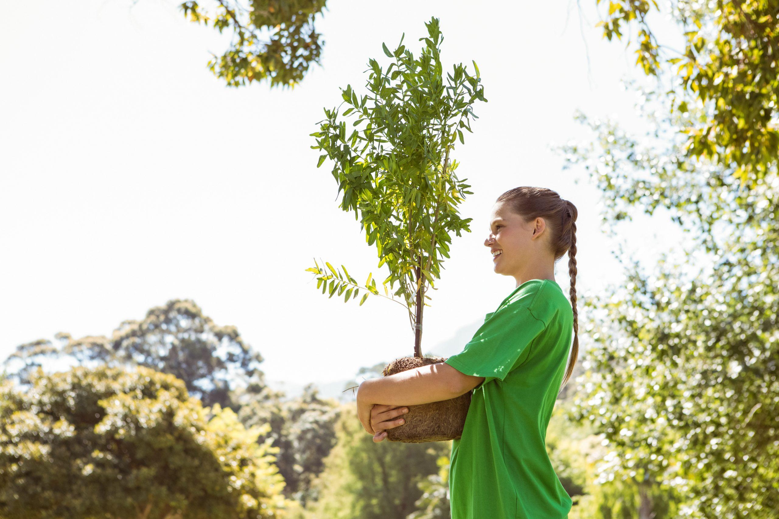 Piantare più alberi